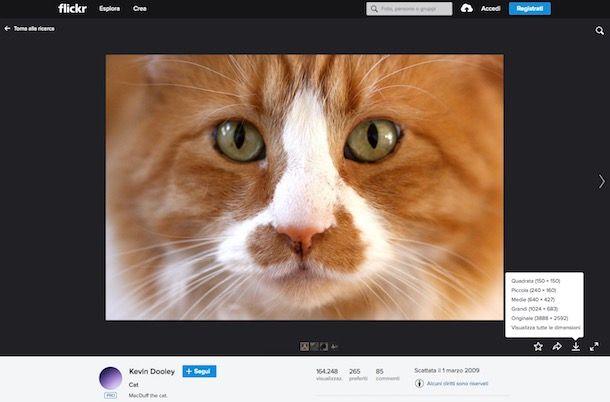 Come scaricare foto da Flickr
