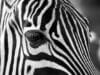 Come trasformare foto a colori in bianco e nero