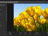 Programmi per modificare foto online