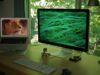 Sfondi desktop HD