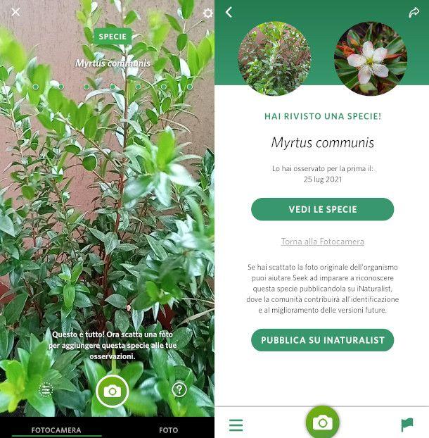 Seek interfaccia principale app