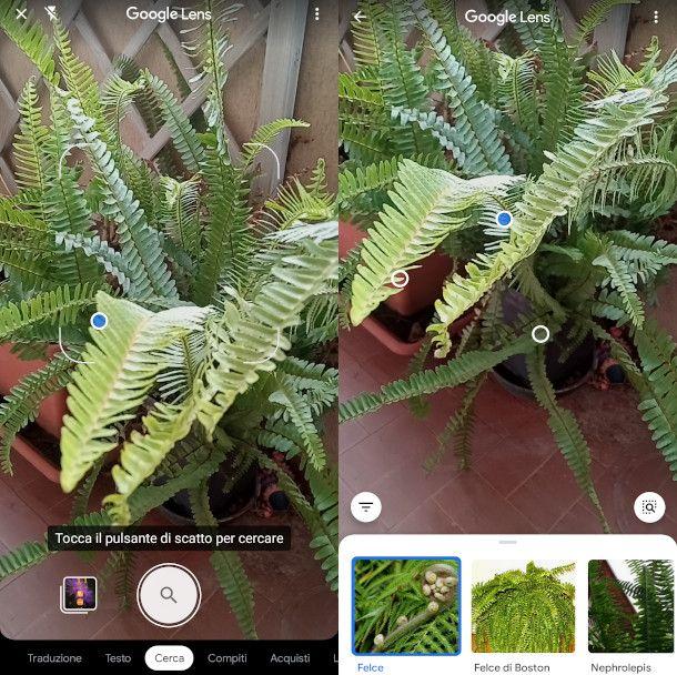 google lens per riconoscere piante