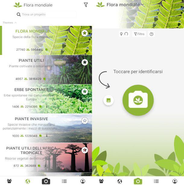 plant riconoscimento piante