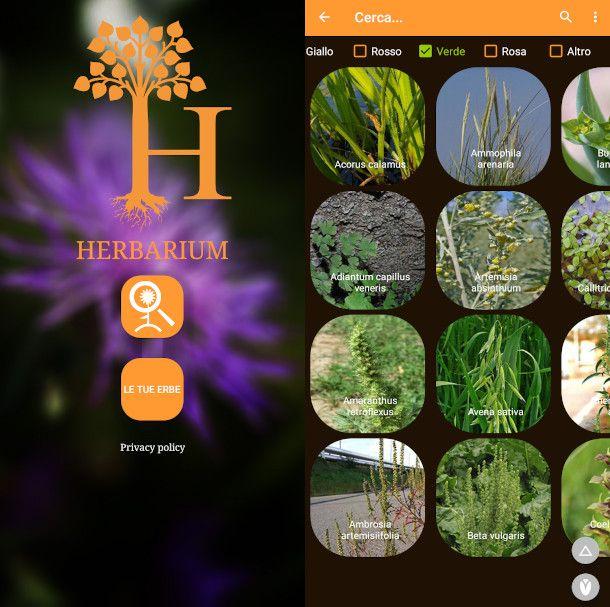 herbarium app erbario offline