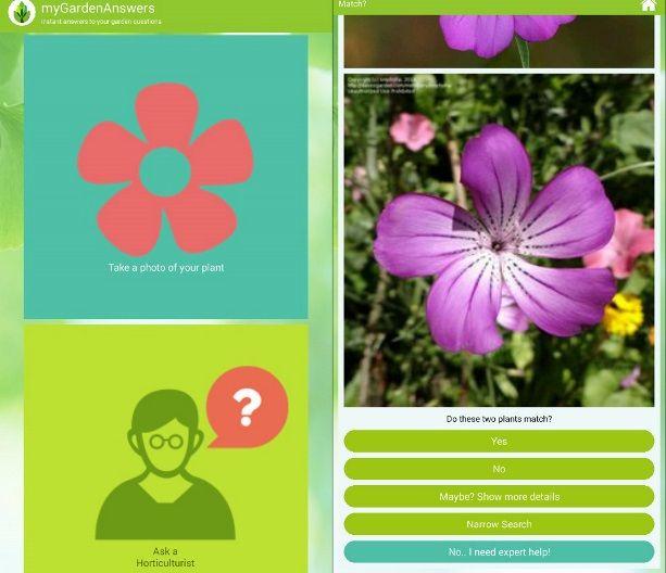 riconoscere pianta