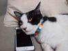 App per gatti