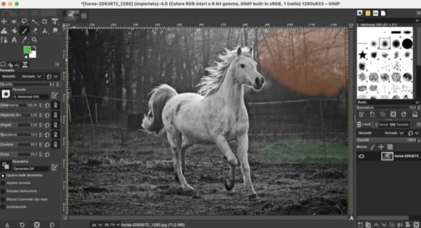 Colorare foto in bianco e nero
