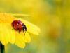 App per riconoscere insetti