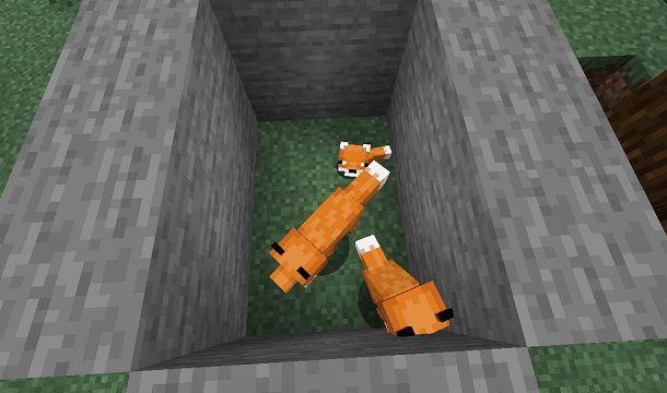 Generare un cucciolo di volpe