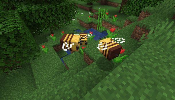 Api su Minecraft
